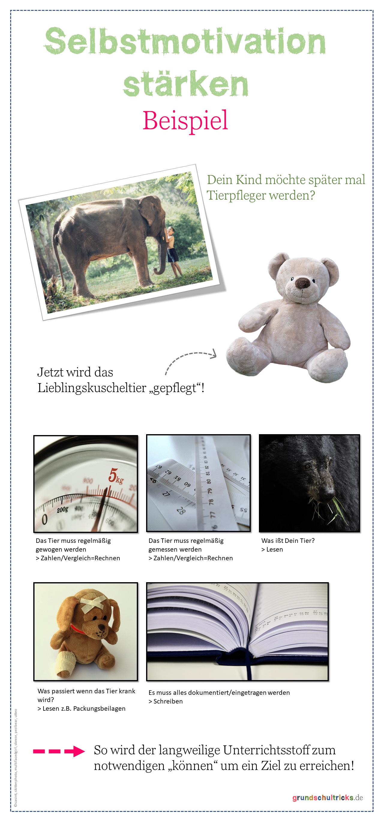 Auf dem Plakat wird eine Abfolge von Bildern gezeigt u.a. ein Kuscheltier, eine Massband, eine Waage. Die Schrift dazu erklärt was man dazu braucht um ein Tier zu pflegen.
